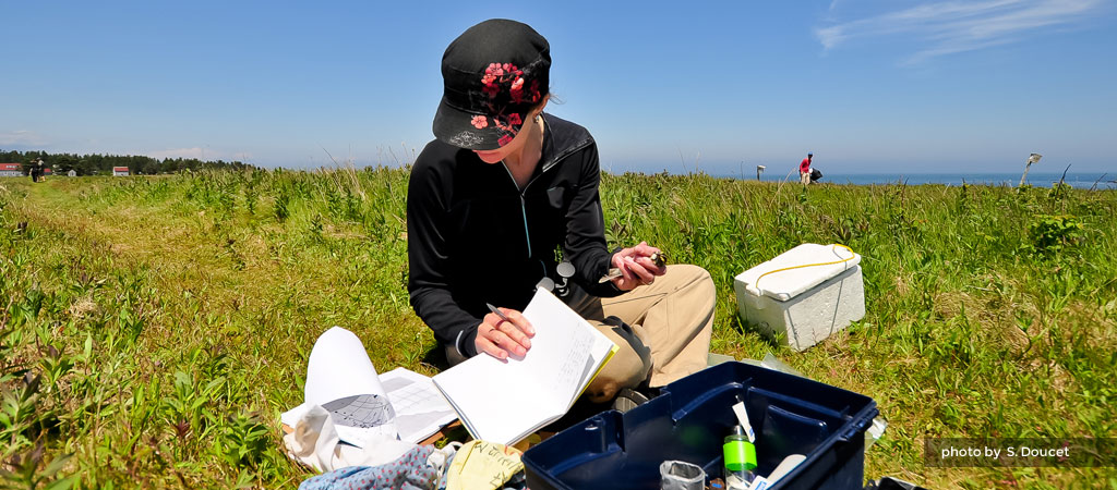 Research at Kent Island