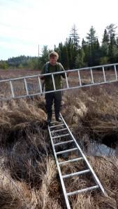 Man walking on ladder across a marsh