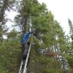 Man climbing tall tree