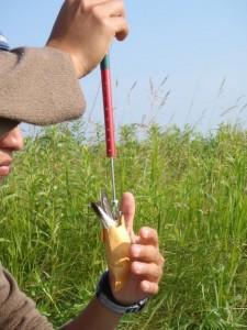 A man measuring a bird