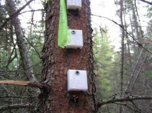 Simulated Gray Jay caches
