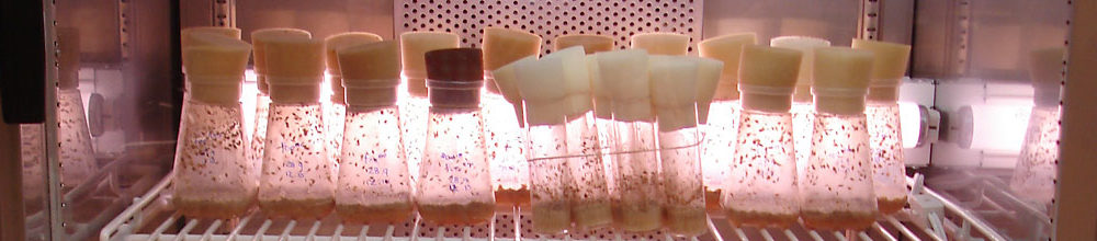 fruit flies in incubator