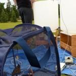 Monarch butterfly in net house